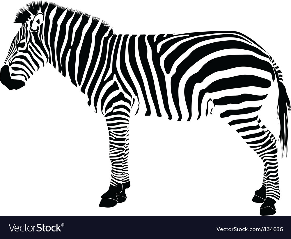 Zebra silhouette vector | Price: 1 Credit (USD $1)