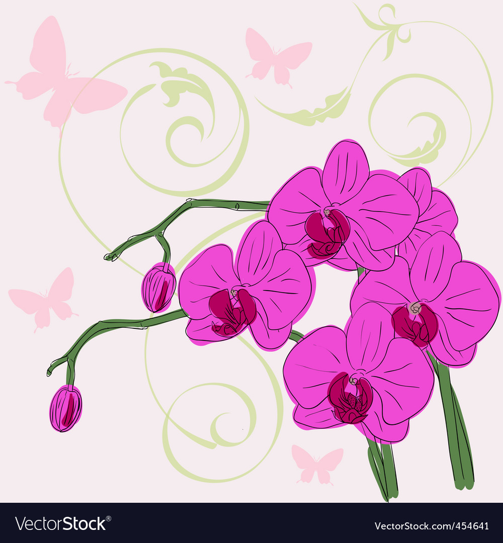 Twig blossoming orchids vector | Price: 1 Credit (USD $1)