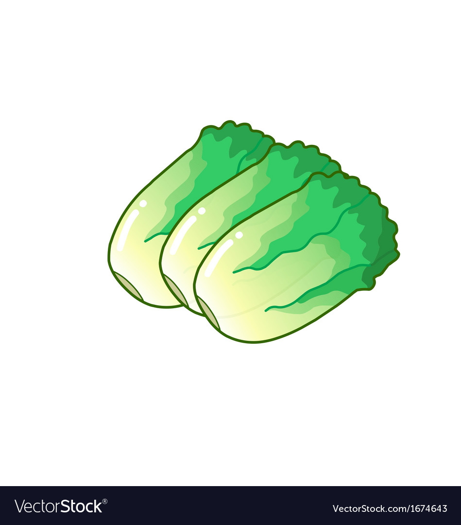 Salad vector | Price: 1 Credit (USD $1)