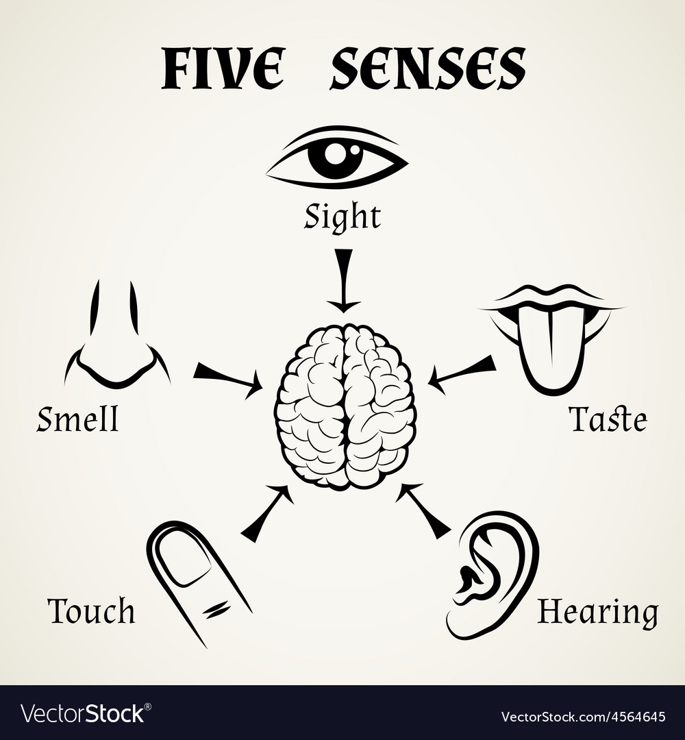 Five senses icons vector | Price: 1 Credit (USD $1)