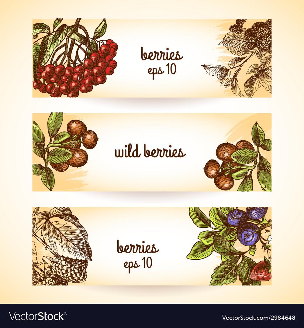 Sketch berries seamless pattern vector | Price: 1 Credit (USD $1)