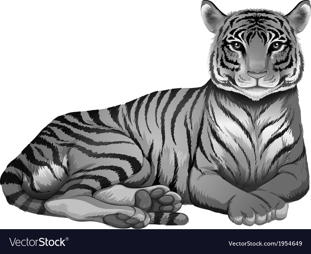 A grey tiger vector | Price: 1 Credit (USD $1)