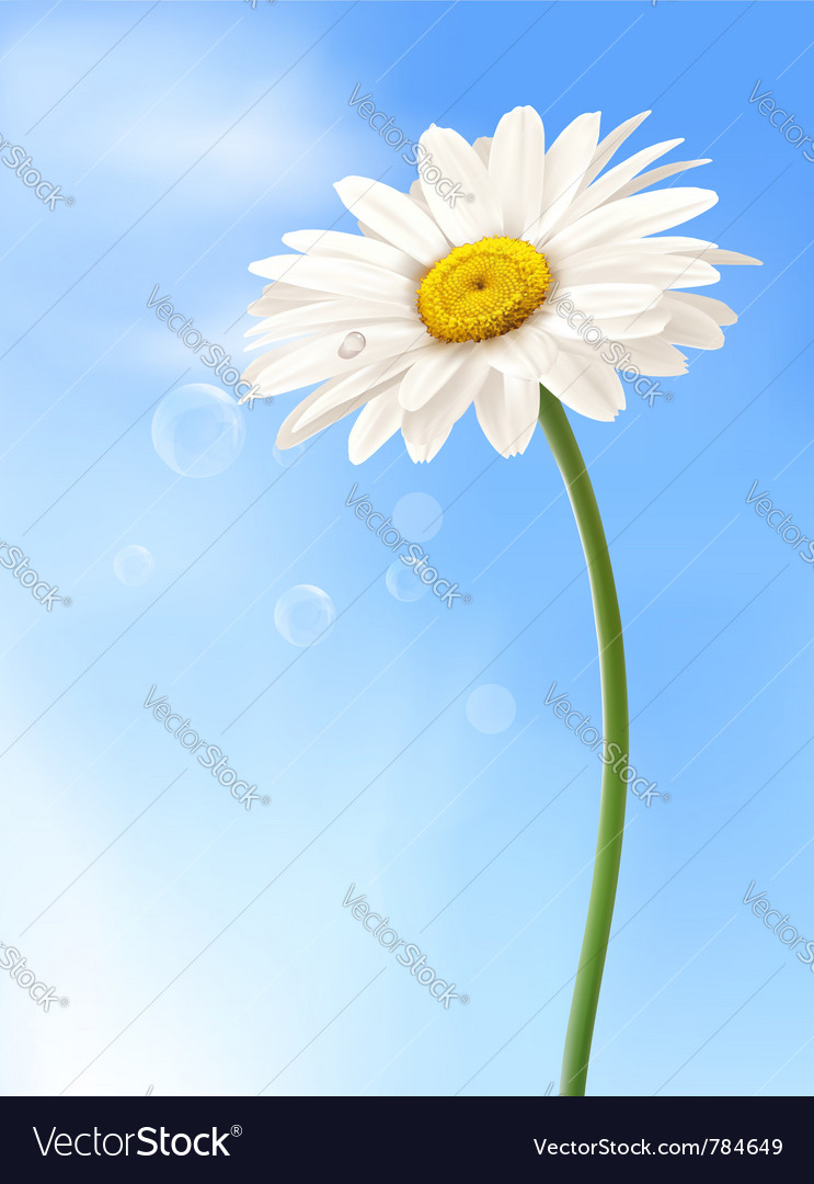 Beautiful daisy card vector | Price: 1 Credit (USD $1)
