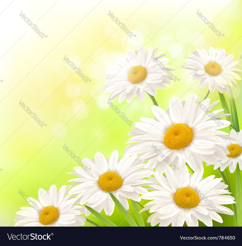 Beautiful daisies background vector | Price: 1 Credit (USD $1)