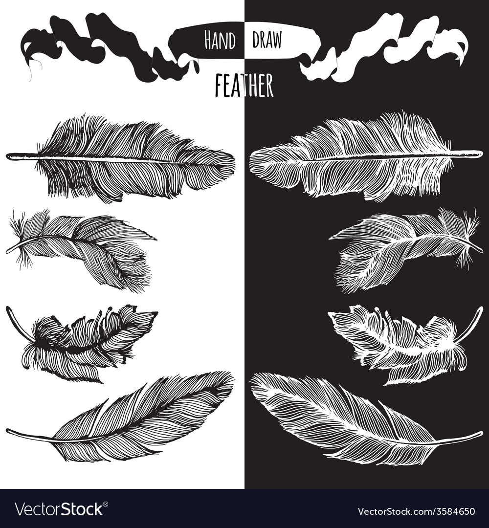 Hands drawn bird feather vector | Price: 1 Credit (USD $1)