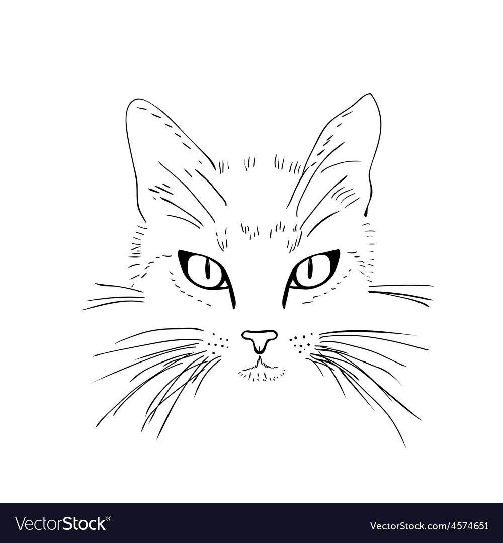 Cat face black and white sketch vector | Price: 1 Credit (USD $1)
