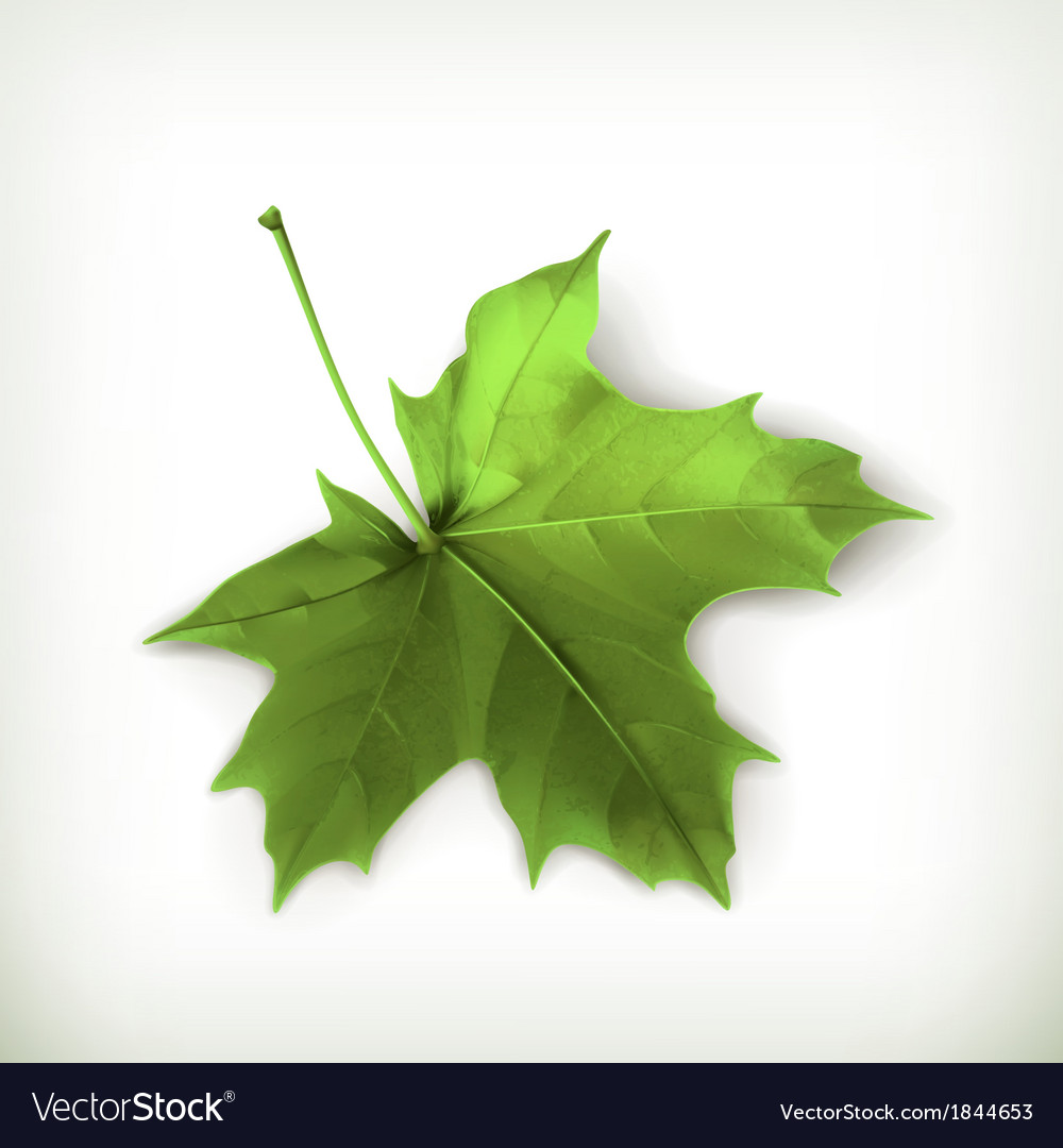 Maple leaf green vector | Price: 1 Credit (USD $1)