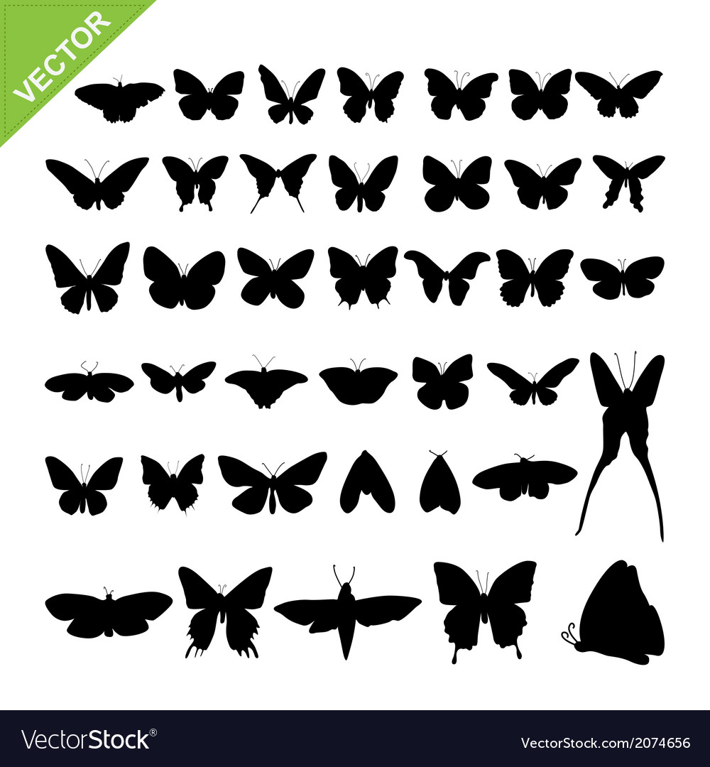 Butterfly silhouettes vector | Price: 1 Credit (USD $1)