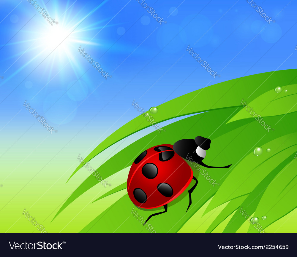 Green grass sun and ladybird vector | Price: 1 Credit (USD $1)