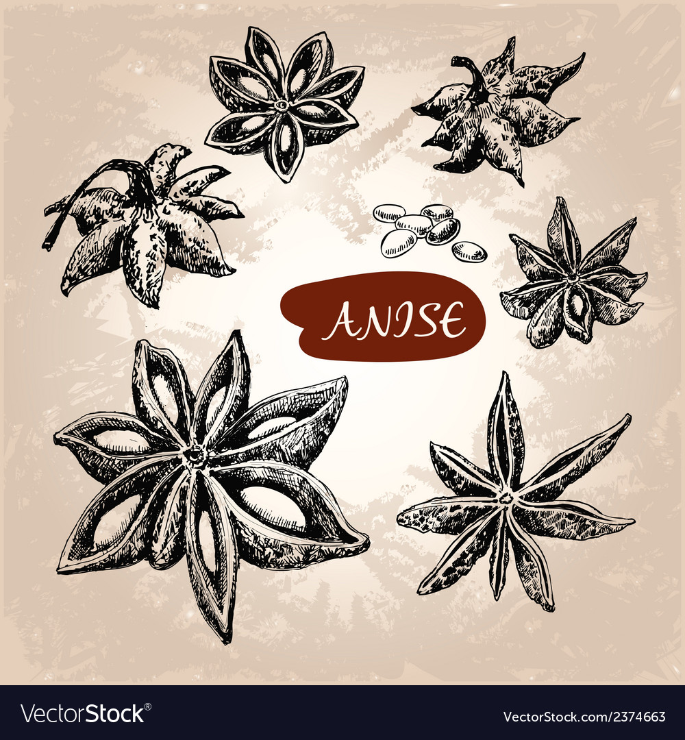 Anise vector | Price: 1 Credit (USD $1)