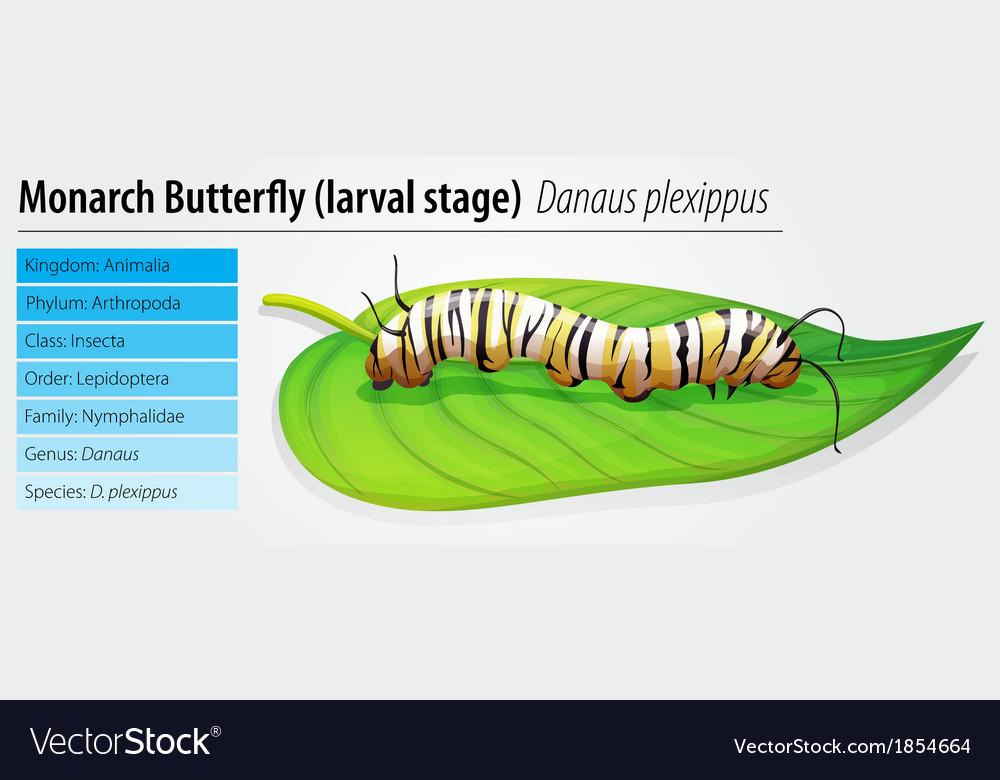 Monarch butterfly - danaus plexippus - larva stage vector | Price: 1 Credit (USD $1)