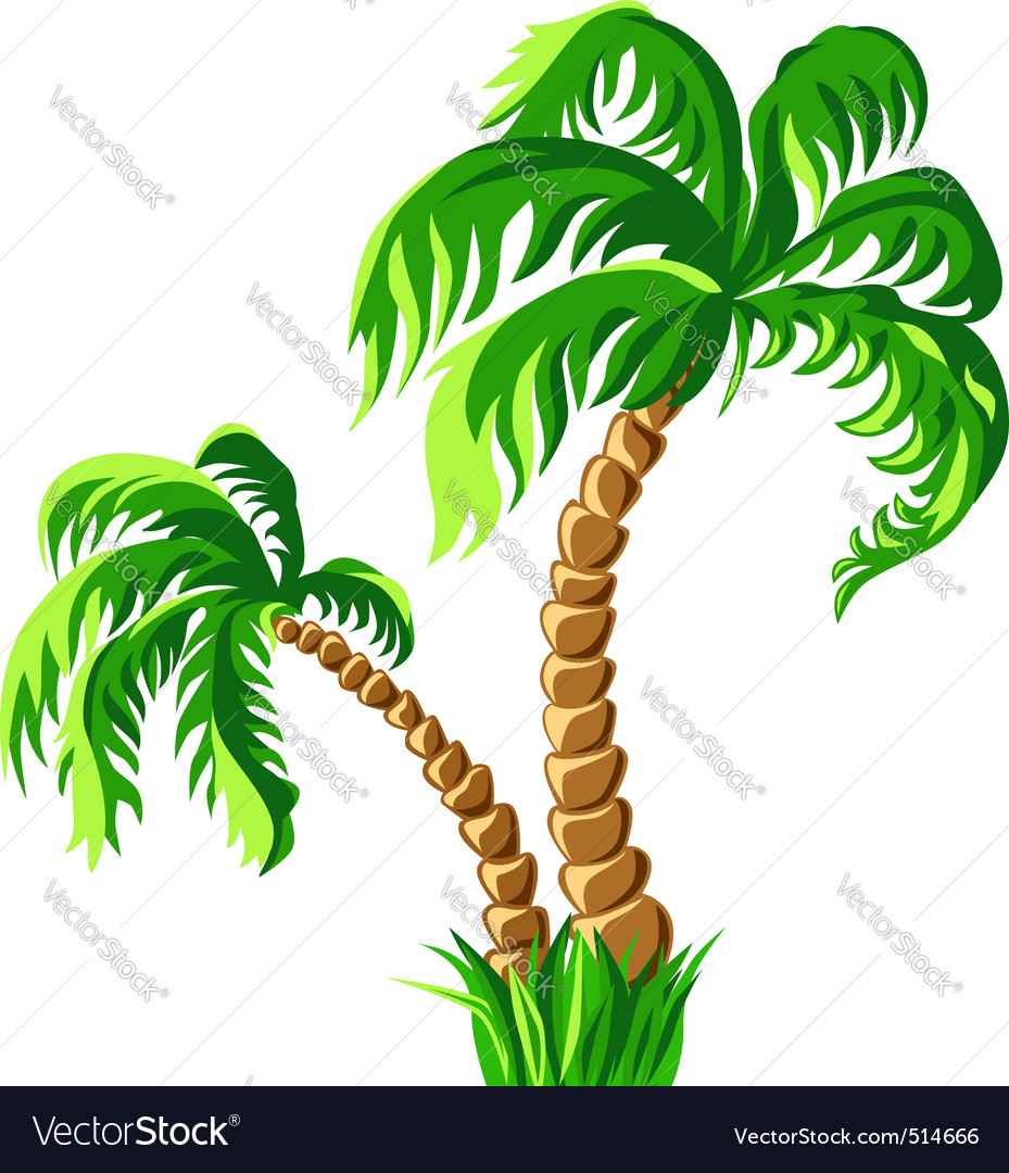 Two palm trees isolated on a white backgrou vector | Price: 1 Credit (USD $1)
