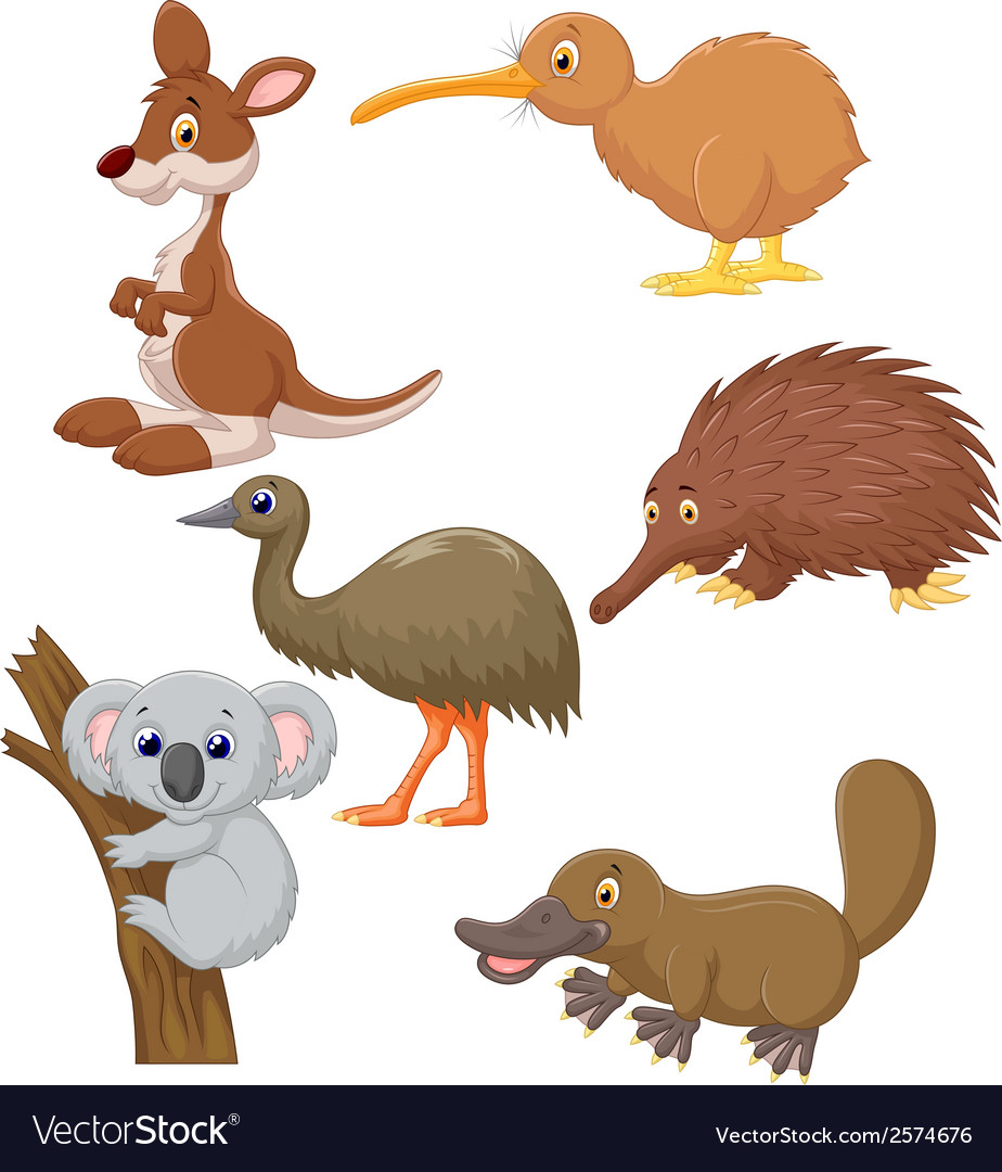 Australian animal cartoon vector | Price: 1 Credit (USD $1)