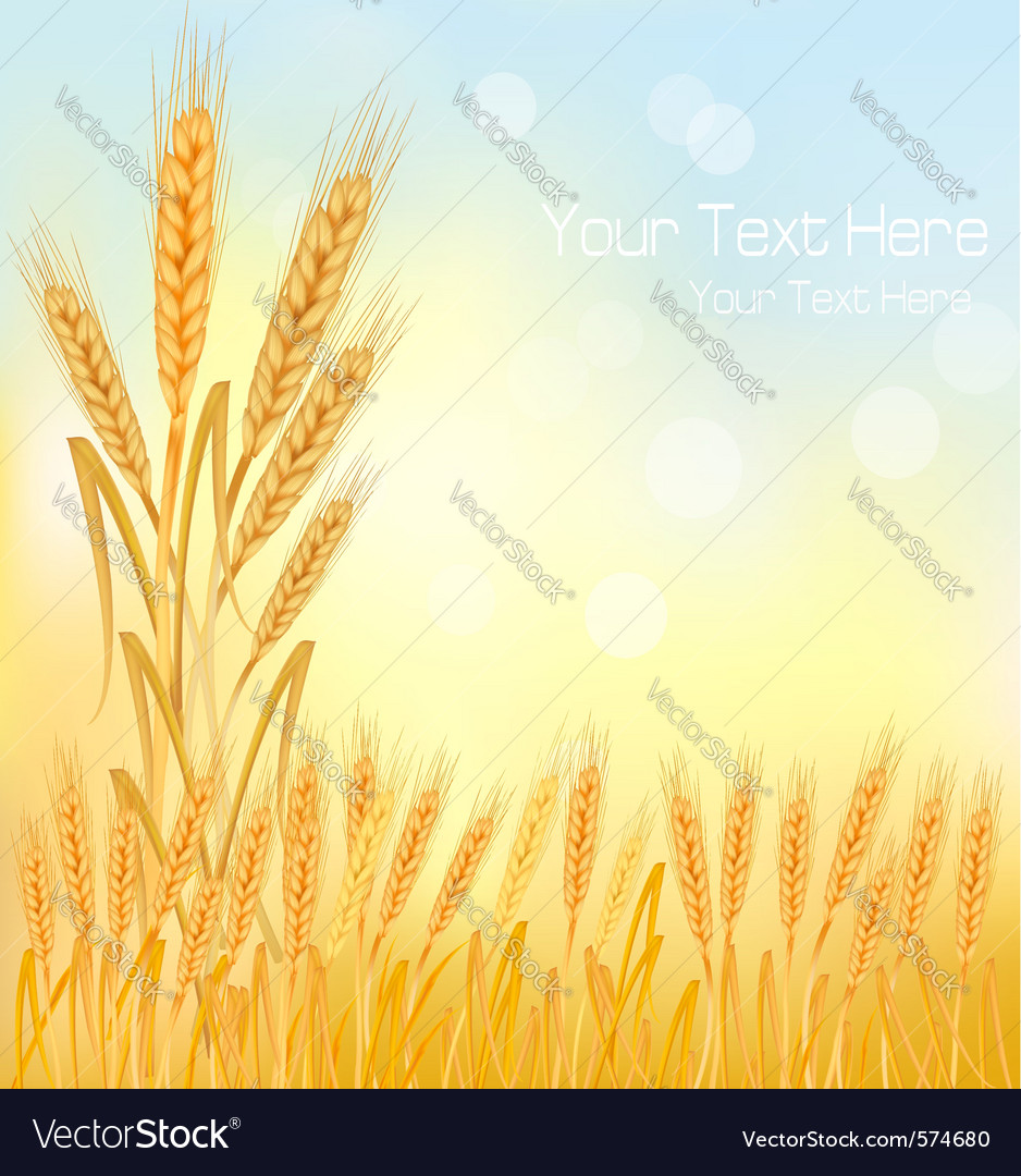 Background wheat ears vector | Price: 1 Credit (USD $1)