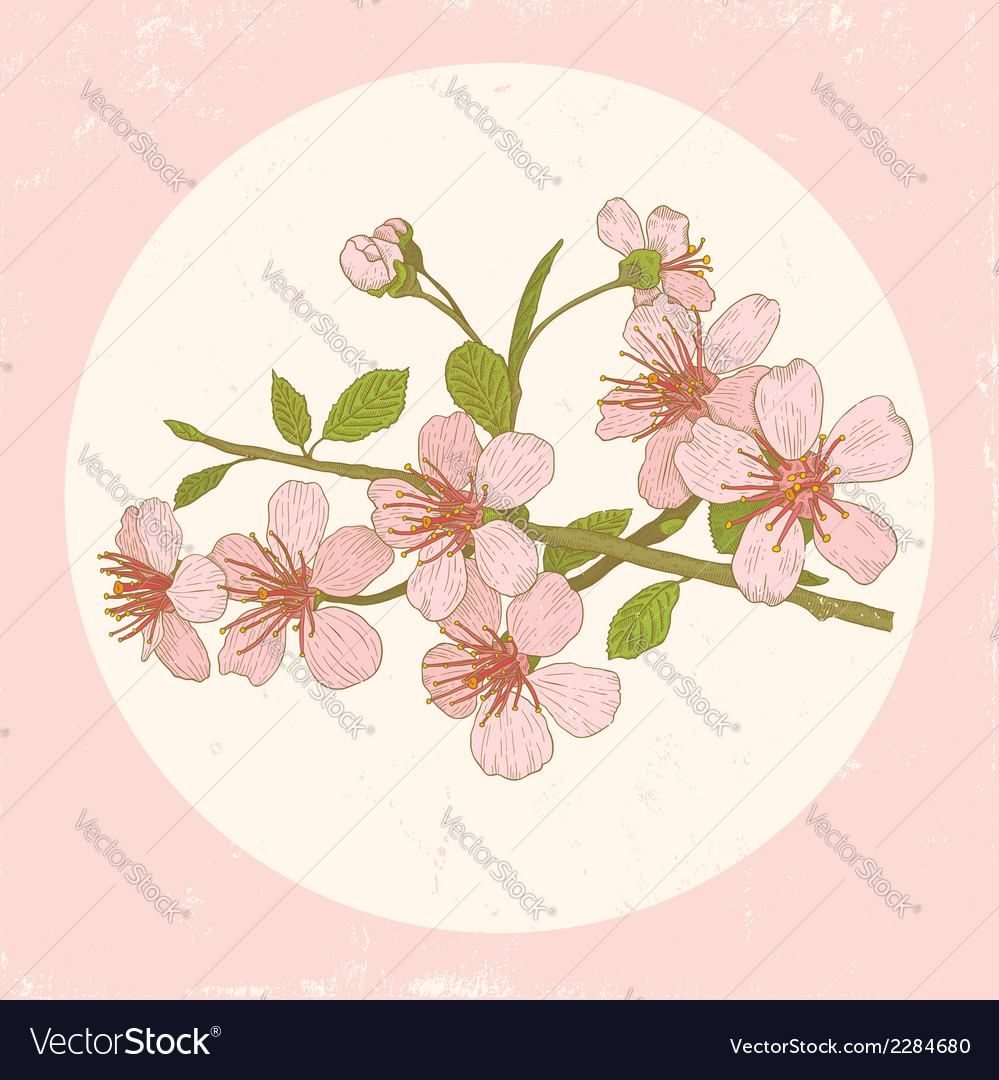 Sakura pink vector | Price: 1 Credit (USD $1)