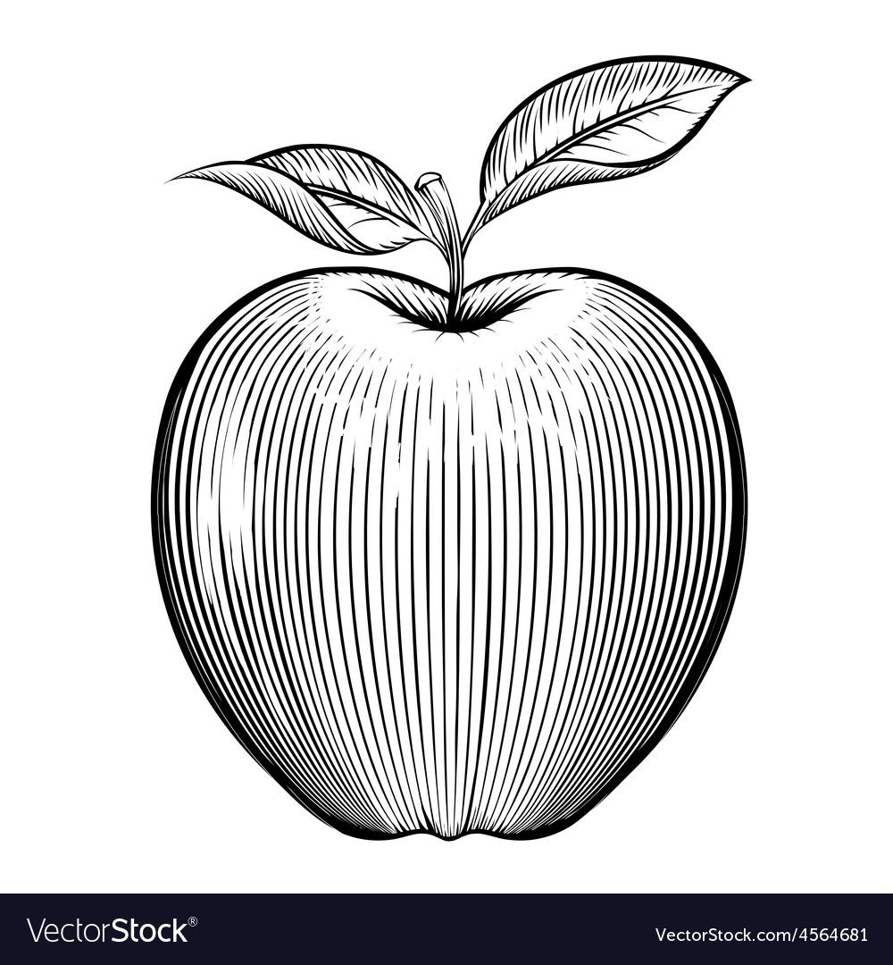 Engraving apple vector | Price: 1 Credit (USD $1)