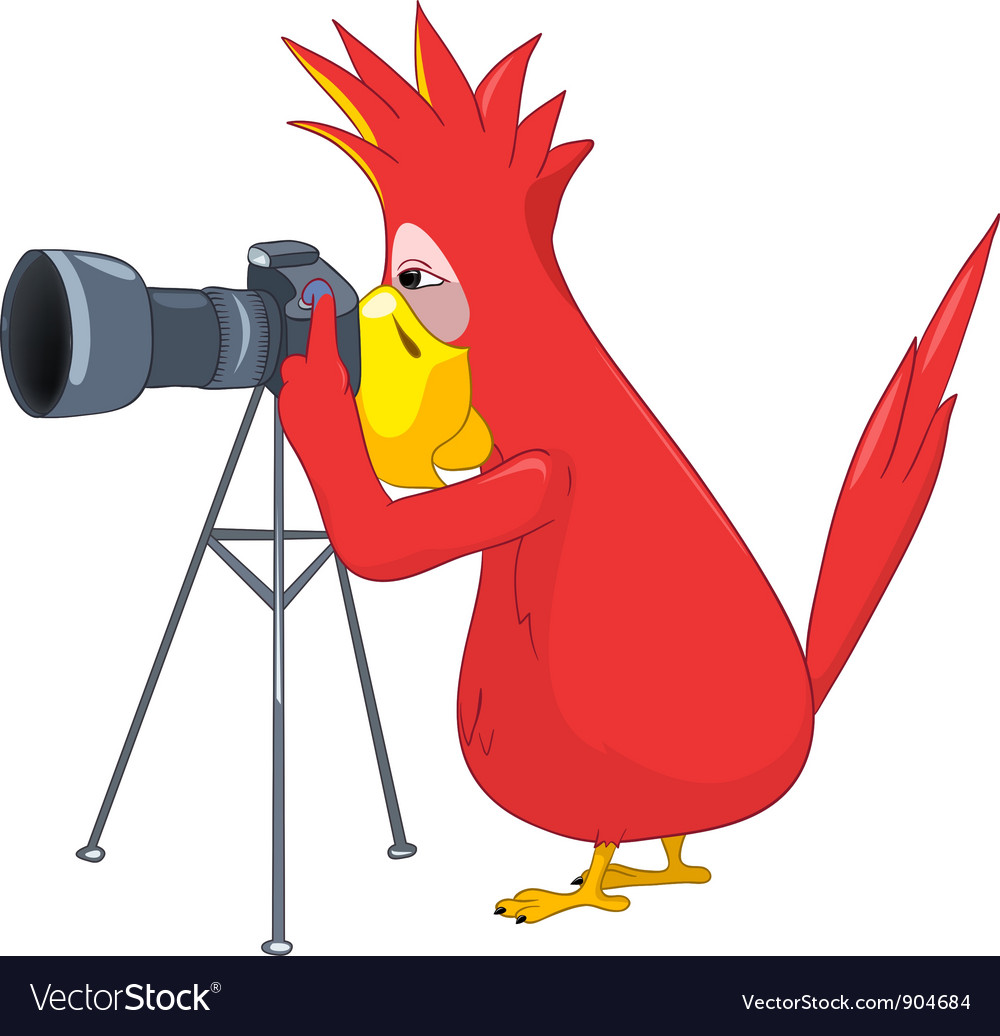 Funny parrot photographer vector | Price: 3 Credit (USD $3)