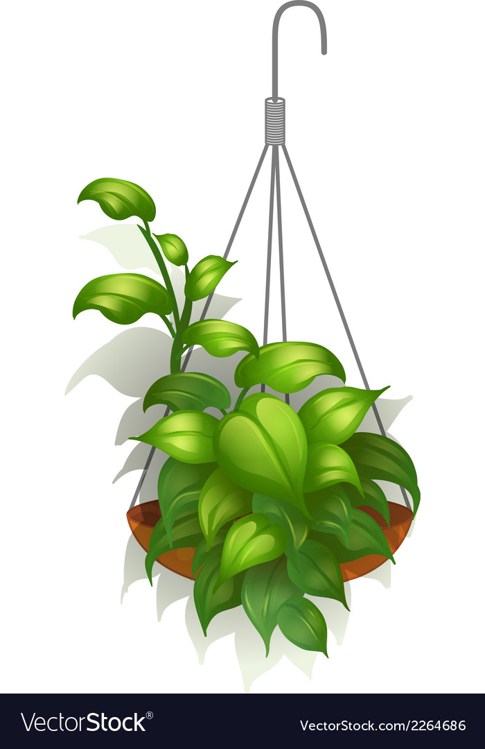 A hanging green plant vector | Price: 1 Credit (USD $1)