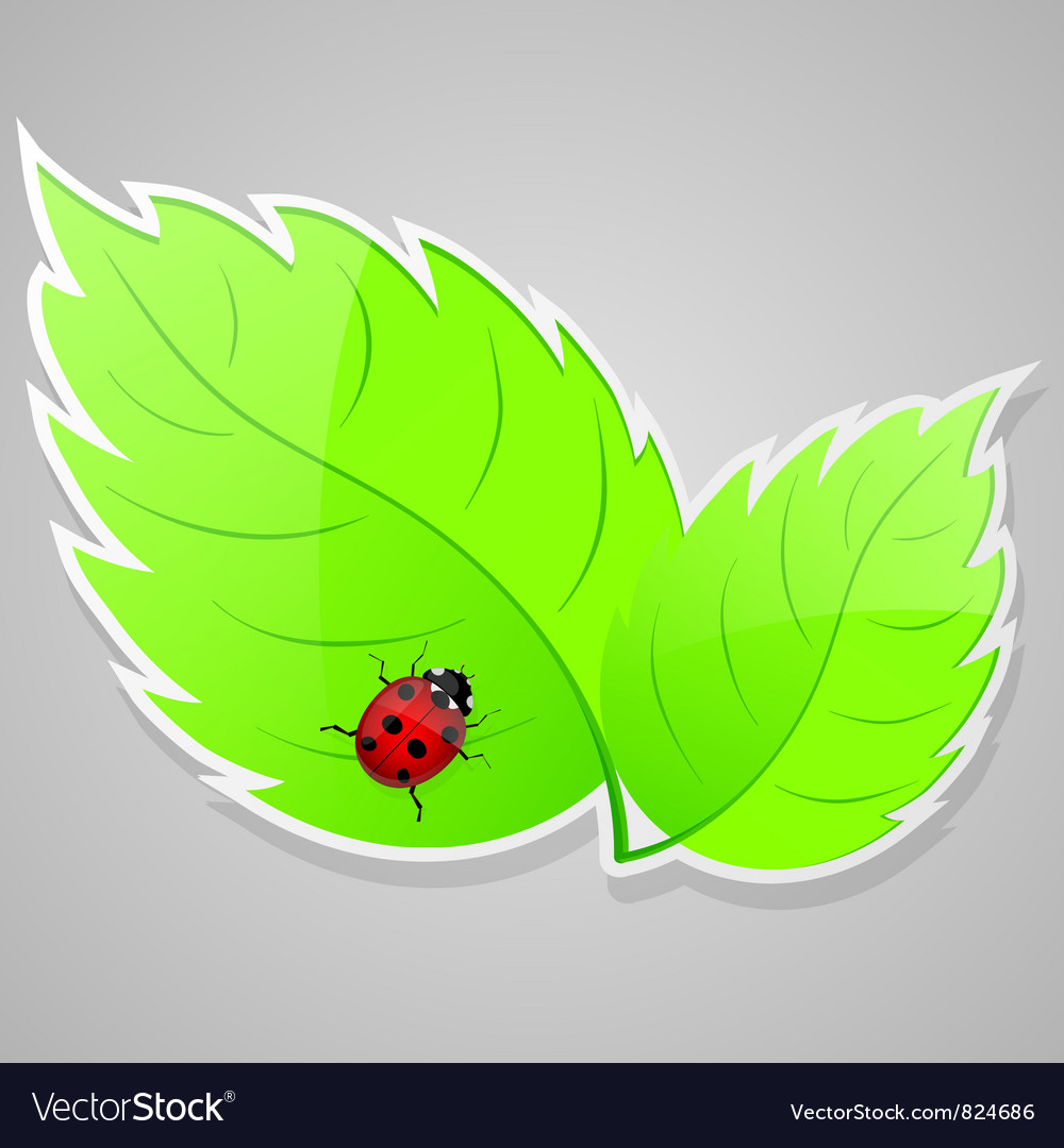 Green leaves with ladybird vector | Price: 1 Credit (USD $1)