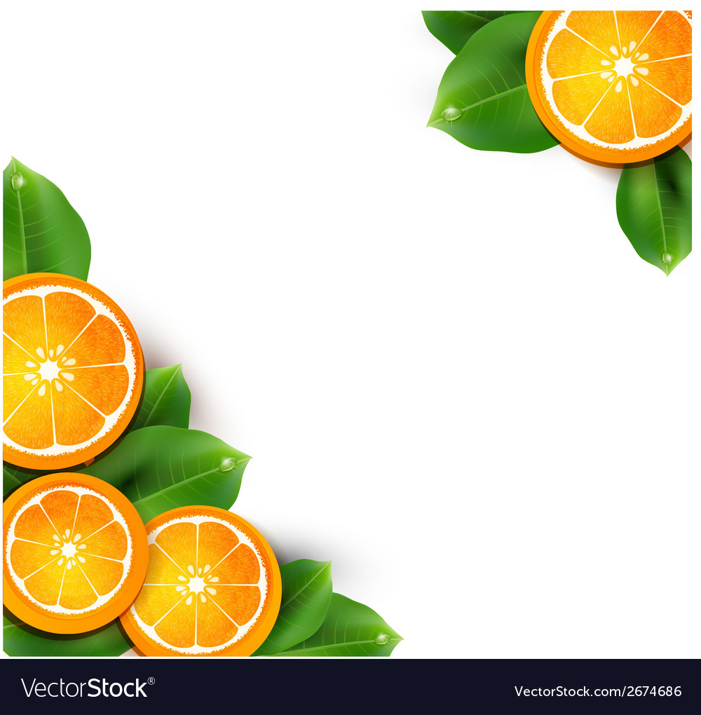 With oranges on the white background vector | Price: 1 Credit (USD $1)
