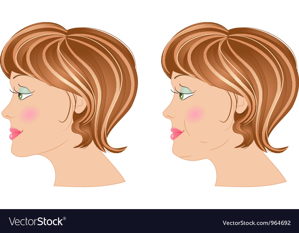 Fat and slim woman in profile vector | Price: 1 Credit (USD $1)
