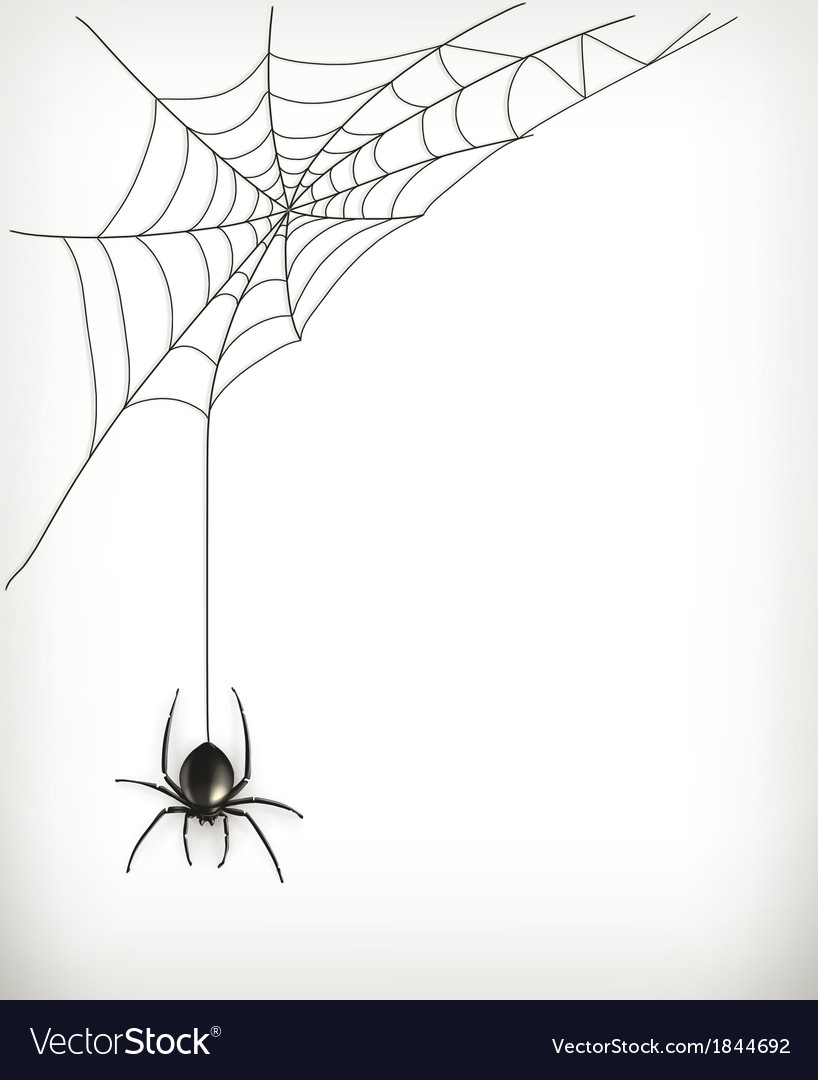 Spider web vector | Price: 1 Credit (USD $1)