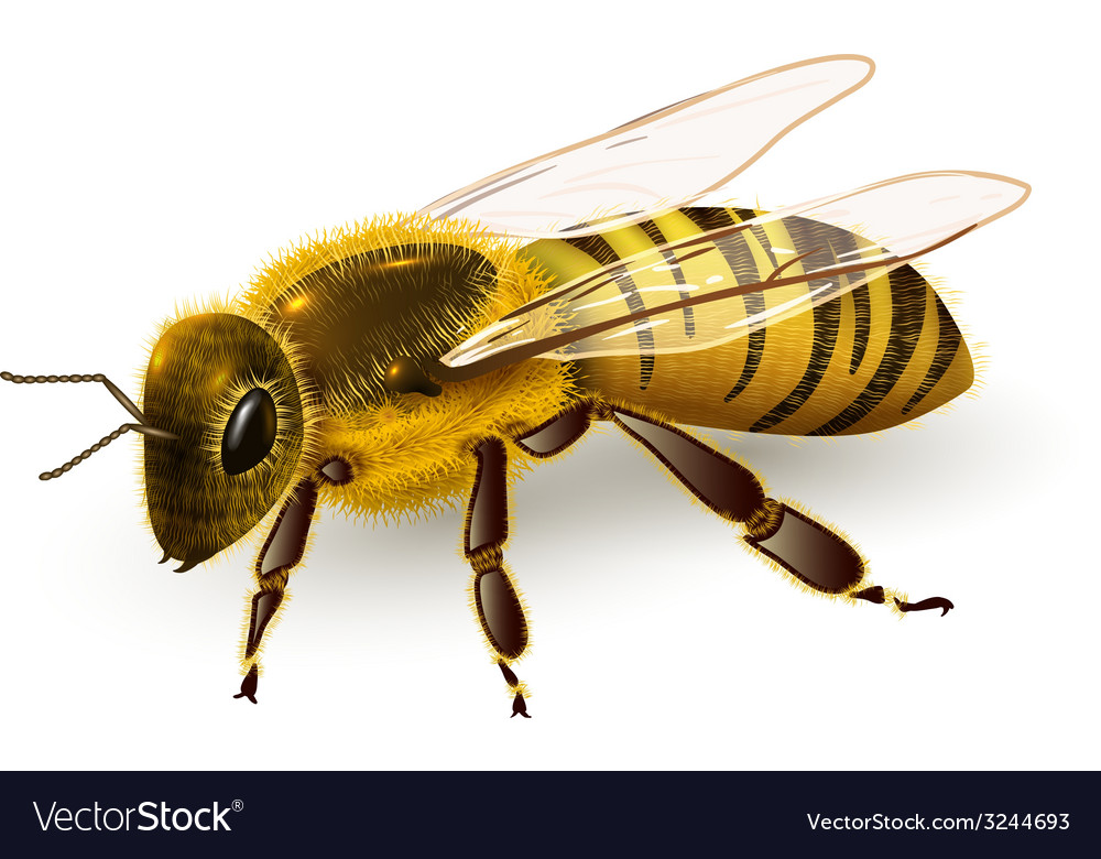 Wasp realistic isolated vector | Price: 1 Credit (USD $1)