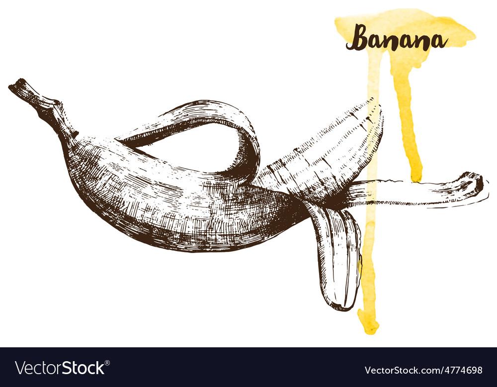 Hand drawn banana vector | Price: 1 Credit (USD $1)