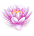 Water lily vector
