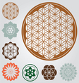 Life seed collection vector