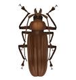 Titan beetle - titanus giganteus vector