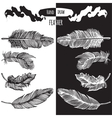 Hands drawn bird feather vector