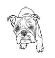 Young bulldog vector