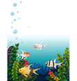 School of fishes under the sea vector
