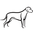 Image of an dog labrador on white background vector