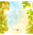 Background with grapes vector