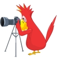 Funny parrot photographer vector