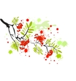 Berries of red viburnum with leaves vector