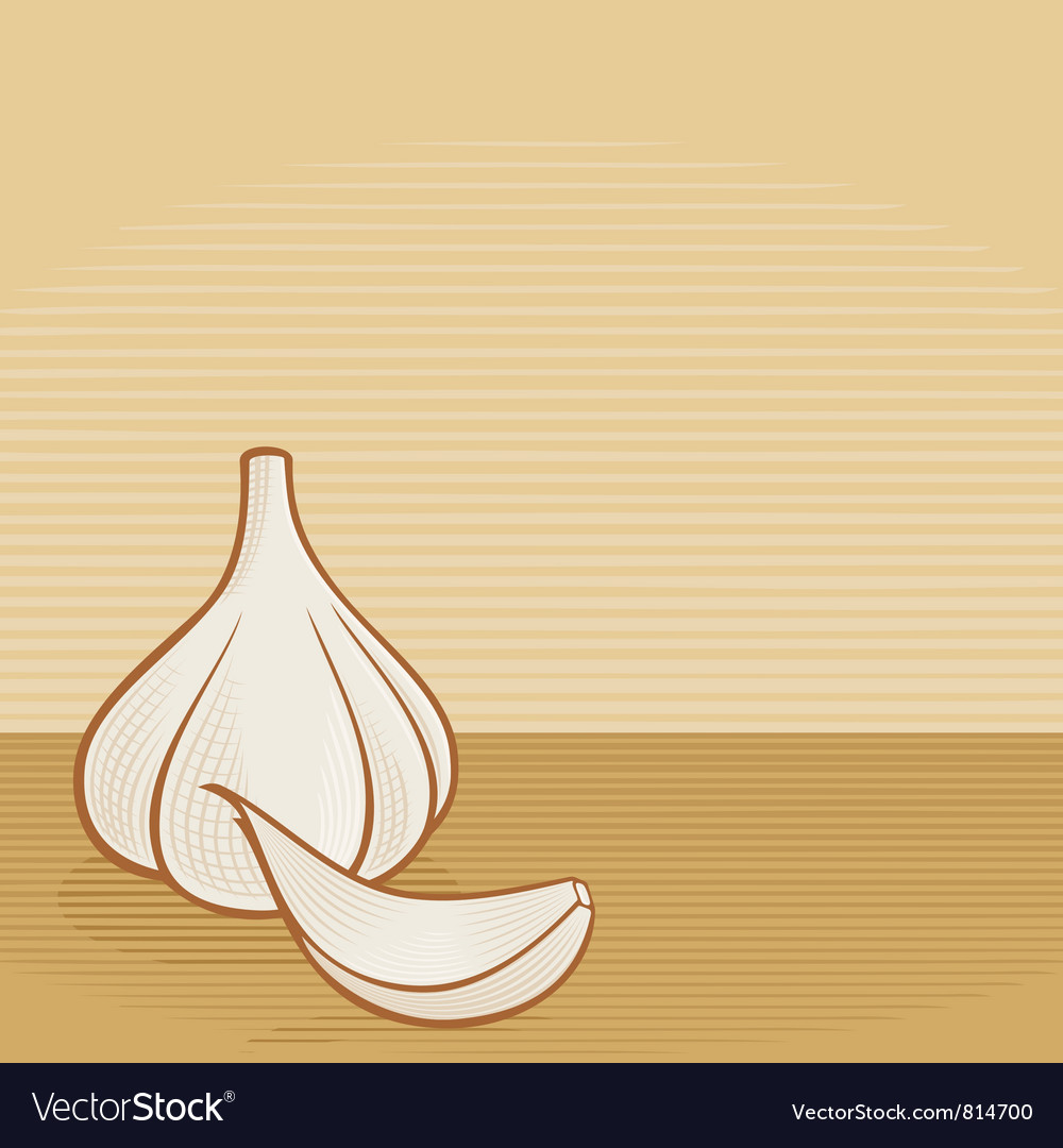 Garlic woodcut vector | Price: 1 Credit (USD $1)