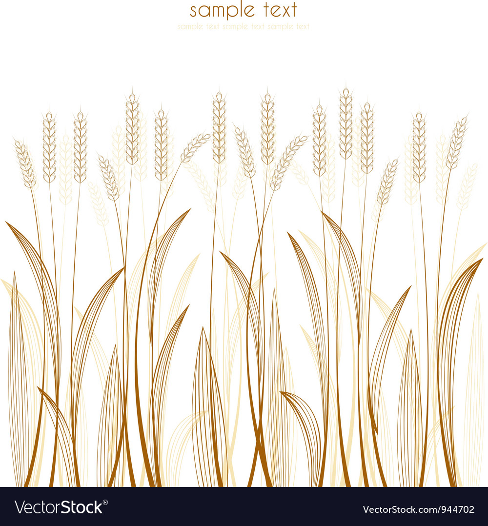 Grain vector | Price: 1 Credit (USD $1)