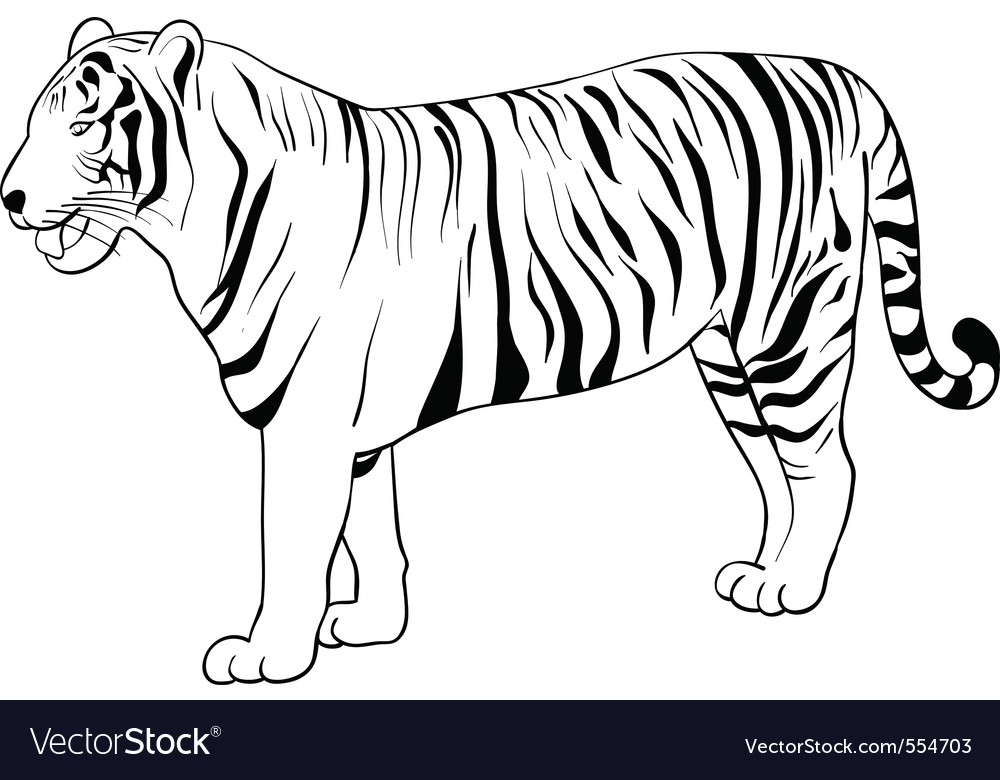 Tiger drawing vector | Price: 1 Credit (USD $1)