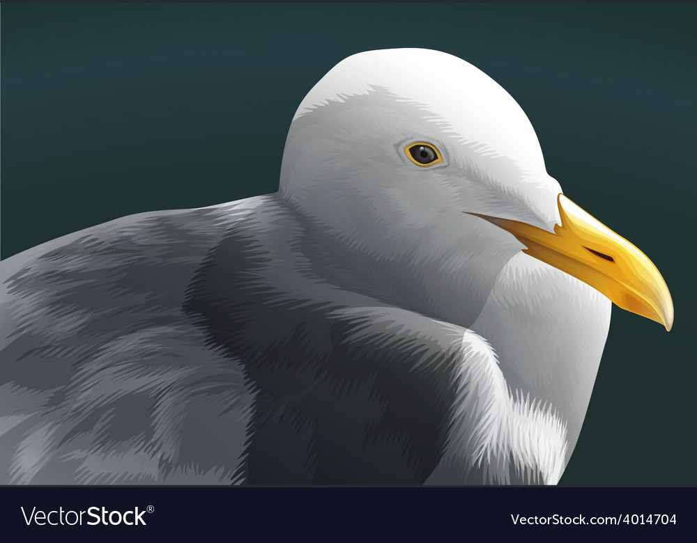 A seagull vector | Price: 3 Credit (USD $3)