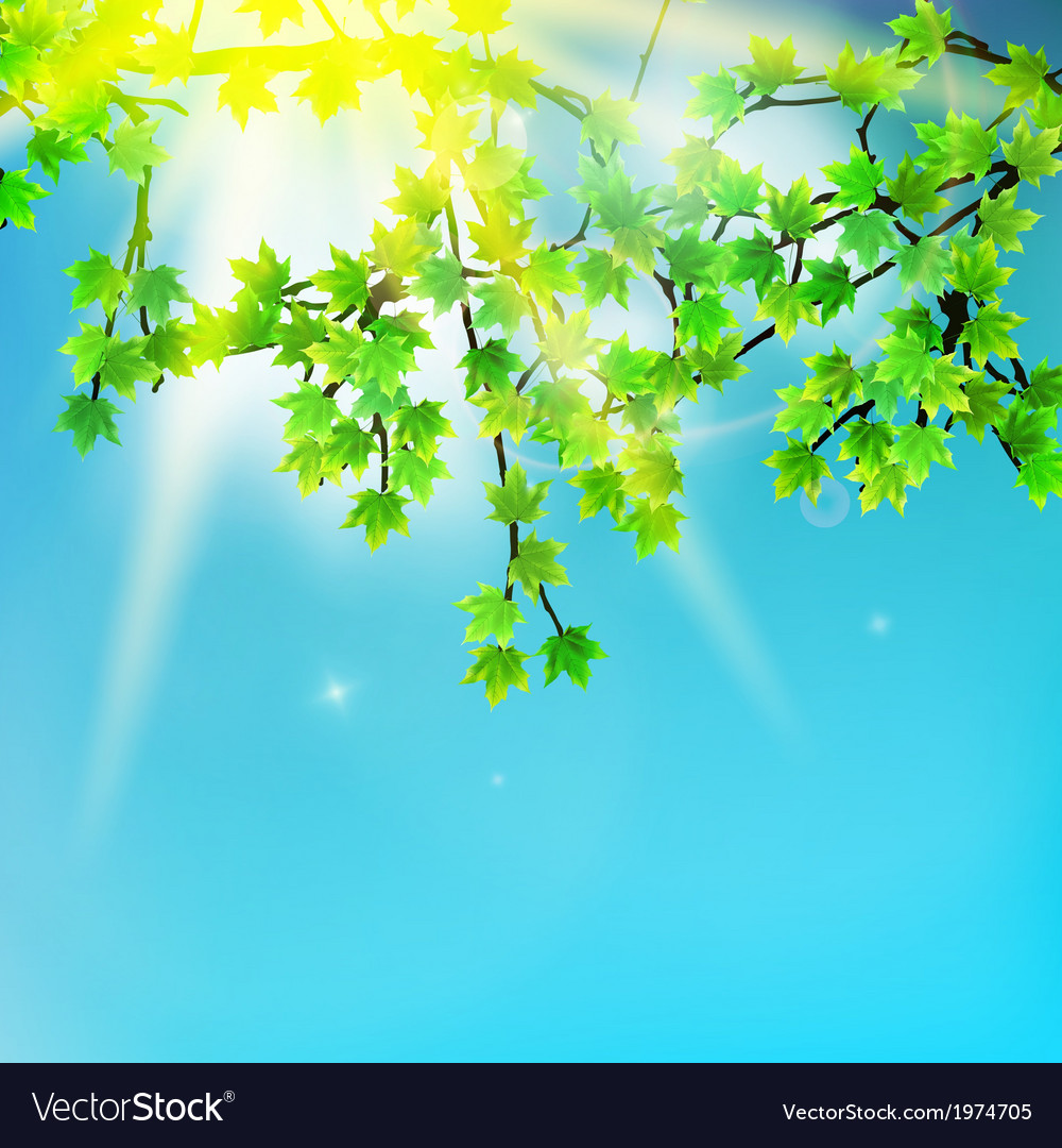 Beauty green leaves branches vector | Price: 1 Credit (USD $1)