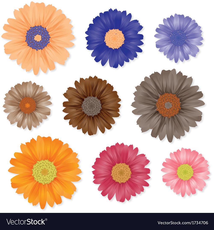 Gerbera flowers set vector   Price: 1 Credit (USD $1)