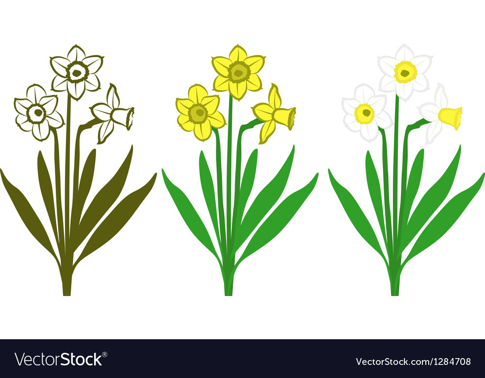 Daffodils vector | Price: 1 Credit (USD $1)