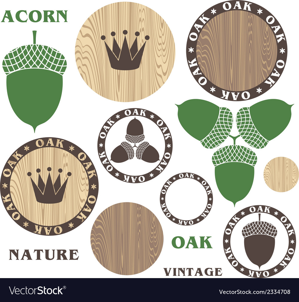 Oak acorn wood vector | Price: 1 Credit (USD $1)