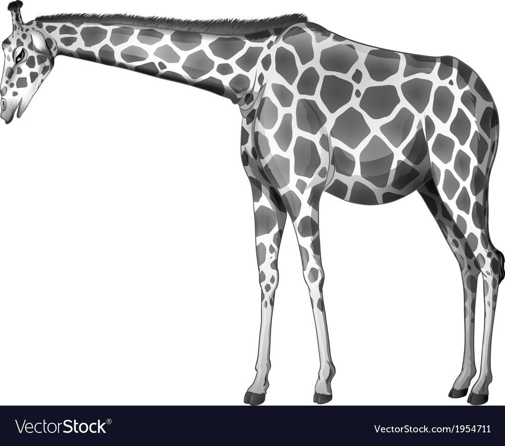 A grey giraffe vector | Price: 1 Credit (USD $1)