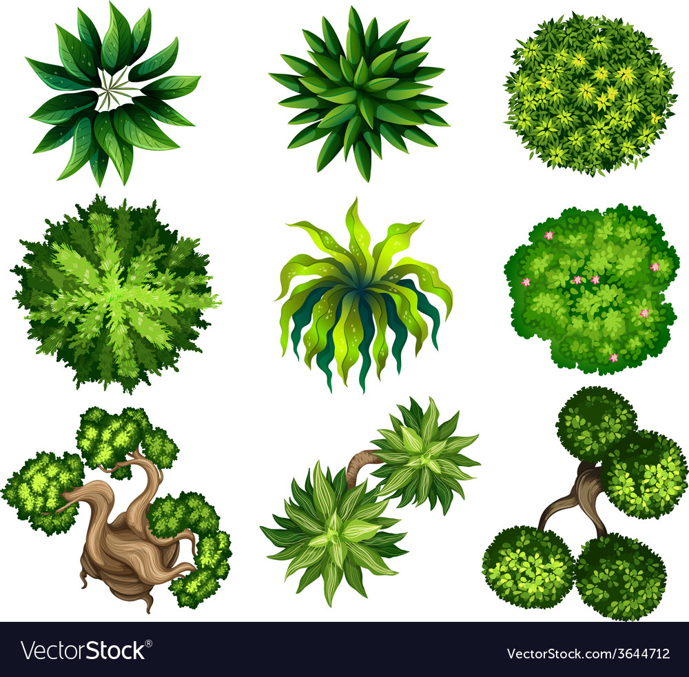 Topview of the different plants vector | Price: 1 Credit (USD $1)
