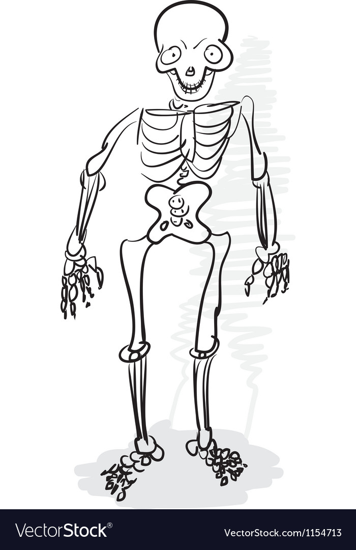 A human skeleton vector | Price: 1 Credit (USD $1)