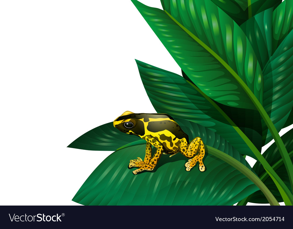 A plant with a frog vector | Price: 1 Credit (USD $1)